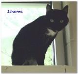Ishema