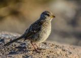 Morro Bay birds