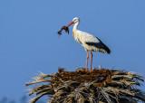Building a nest