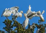 Treetop dancers