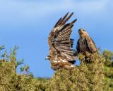 Double kite