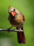 The curious cardinal