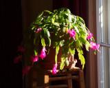 Flowers in the morning light