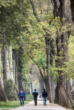 Tall trees - Dushanbe