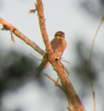 Zoo class TN Birds 2/16