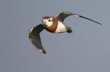 Rare Birds Sweden