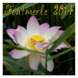 FONTMERLE 2014 - L'étang au LOTUS