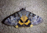 8770-8879 - Noctuidae; Catocala