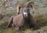 Colorado Wildlife; August 2013