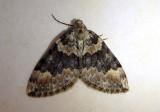 7182-7648 - Geometridae; Dysstroma through Lithostege