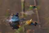 Kikkers, padden, hagedissen en salamanders