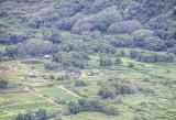 Waipi'o Valley farms
