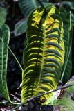 Hawaii Tropical Botanic Garden