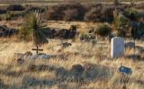 Cemetery in community of Organ, NM