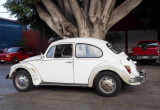 Old style classic VW Beetles are very common