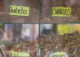 Oaxaca market - herbal remedies