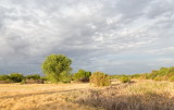 A 'wetland' area of Mesilla Valley Park mostly dry from almost 4 years of drought