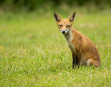 nj_fox_15