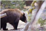 Sequoia National Park April 2014