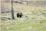 Yellowstone National Park April/May 2015
