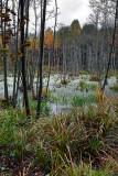 Sobibór marshes