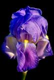 Cirrus Beauty 3