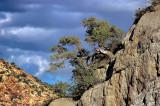 Mt. Potosi Canyon Road