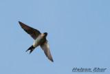 Swallow & Swift