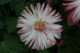Pink Flower MacroMay 10, 2013