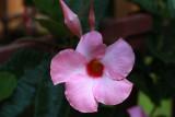 Pink Flower MacroMay 30, 2013