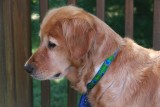 Our Dog PrancerAugust 17, 2013