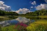 Local Pond - HDRAugust 23, 2013