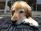 Prancer Resting on the Deck