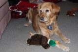 Our Dog PrancerNovember 10, 2013