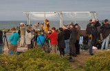 Birders at Falsterbo