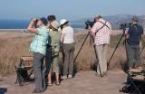 Raptor birders, Cazalla, Tarifa