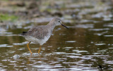 Scolopacidae - Sandpipers, Snipes