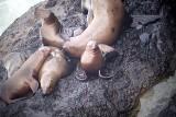 2007 Mammal Photos