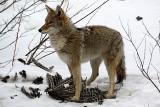 2012 Mammal Photos