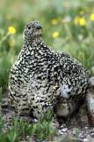 2008 Bird Photos