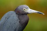 2007 Bird Photos