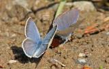 Butterfly 2014-07-20