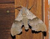 Moth 2014-07-25