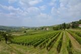 Wijngaard bij Alba