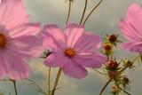 Bloemen langs een akker