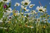 Bloemen op een dijk