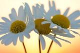 Bij ondergaande zon