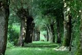 Een vos kruiste mijn pad