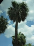 IMG_0597.Double Palm Tree