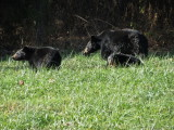 8563.Mom-2Cubs (8597 file)